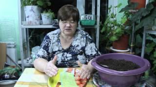 Крепкая Рассада - отличный Урожай! О рассаде перца.