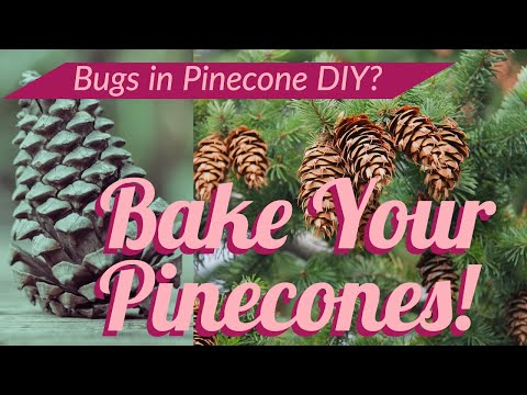 How to Bake Pinecones to Get Rid of Bugs