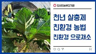 천연 살충제 채소 재배방법