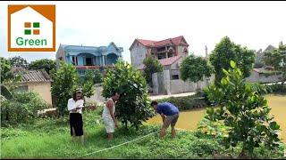 Phần 4 : Khảo sát khu vườn để xây nhà vườn đẹp tại Yên Dũng Bắc Giang