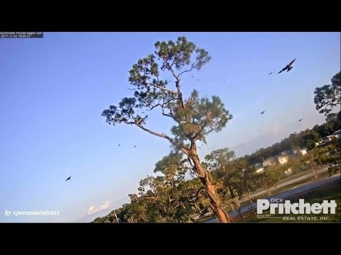 Southwest Florida Eagles(SWFL Eagles)  -  Starlings Invasion