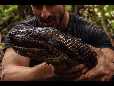 Man EATEN ALIVE by Anaconda - What is Going on There?