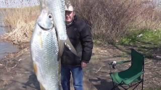 Фидерная снасть  .Весенняя рыбалка на реке Днестр.С каким активатором клева ловлю на червь и опарыш