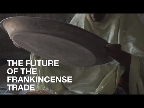 The Future Of Frankincense | News In Brief | Lush Times