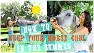 How To Keep Your Horse Cool  And Hydrated In The Summer