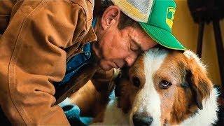 Собачья жизнь 2 2019 — Русский трейлер