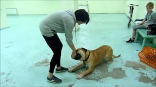 фитнес для собак в Тюмени