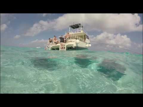 Stingray City Grand Cayman Islands