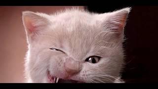 злые и смешные морды(котов)