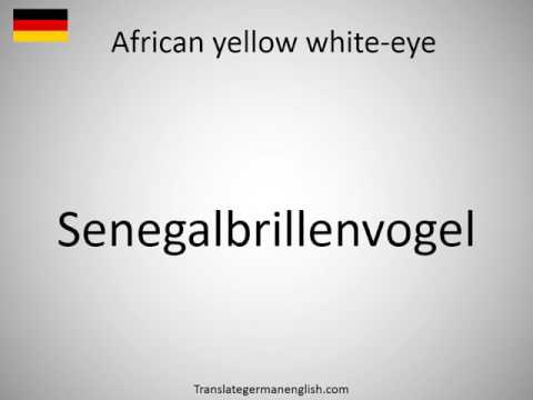 How to say African yellow white-eye in German?