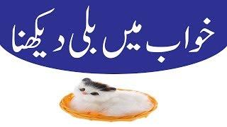 vuclip Khawab Mein Billi Dekhna Khawab Mein Billi Dekhny Ki Tabeer in urdu Bay Khwabon Ki Tabeer