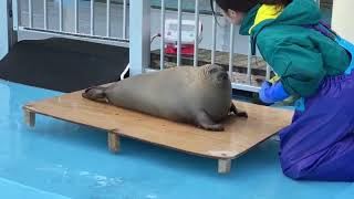 Chonk gets weighed