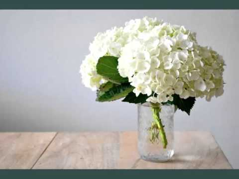 Image result for white hydrangea images""