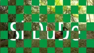 Video Pikat Ayam Hutan Pikat Selapis Tapau download MP3, 3GP, MP4, WEBM, AVI, FLV Juli 2018