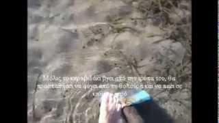 Ψάρεμα-Καραβιδάκι/Μαμούνι για δόλωμα-Yabbies/Ghost shrimp-fishing bait