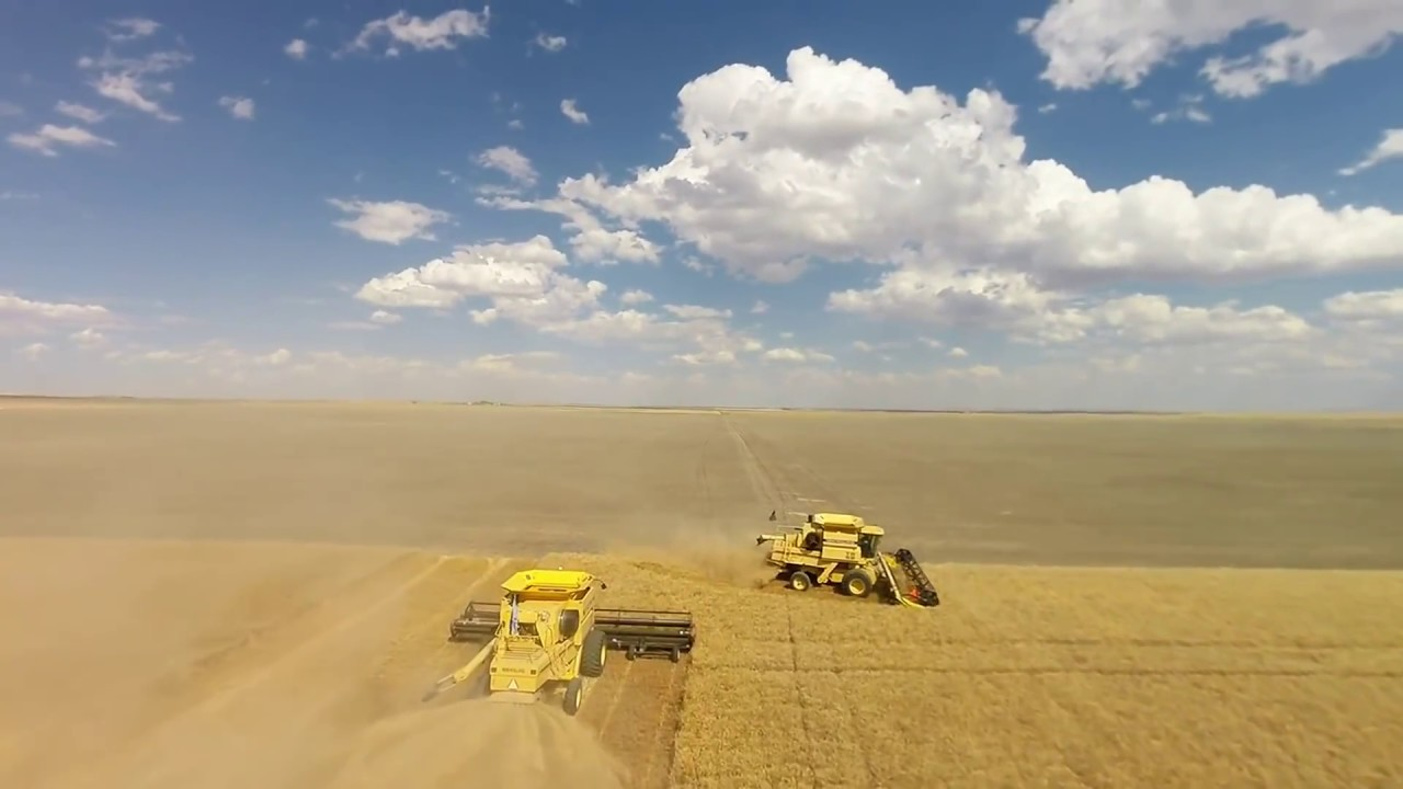 The Next 100 Years >> Van Dyke Farms 2016 Winter Wheat Harvest. Conrad Montana ...