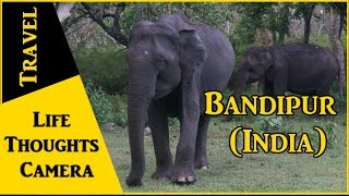 Travel Diary : Bandipur in Karnataka (India) - Ep 144 | Life Thoughts Camera
