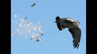 2017 ОХОТА НА УТОК, ГОЛУБЕЙ Киевская обл.!!!  день 5!  Убил гильзой. Стрельба в шеренгу:) Target m20