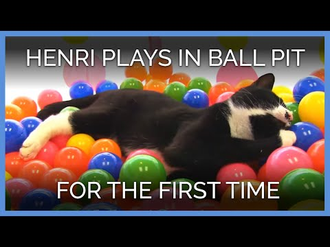 Rescued Cat Plays in Ball Pit For the First Time