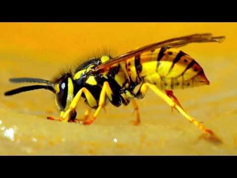 Вопрос: Как обработать укус насекомого?
