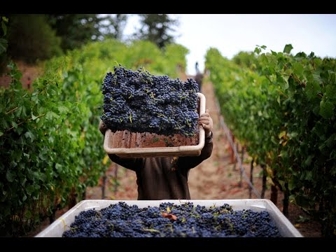 A Revolution In The Wine Regions Of South Africa