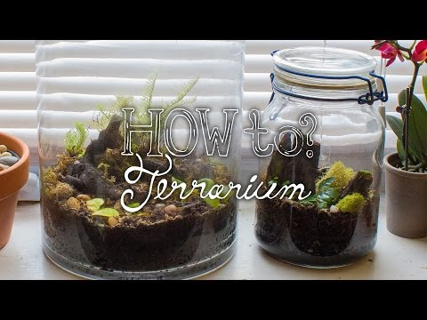Make a Closed Tropical Terrarium - How To Terrarium ep.2