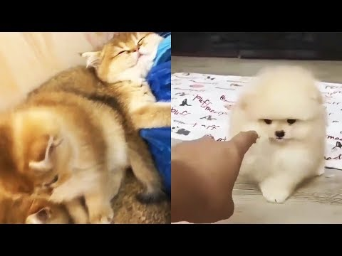 Cutest Cats and Dogs Videos Compilation Cute Funny Animal Moments #1