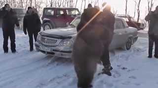 Медведь Яшка  Это Россия, детка