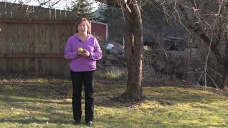 Gardening Tips : How to Prune Pear Trees in Winter