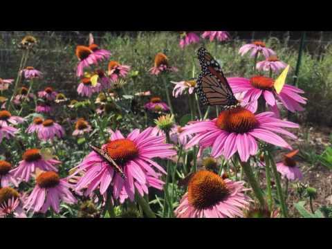 Lady Bird Johnson Wildflower Center Designated Texas State Botanic Garden and Arboretum