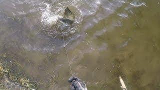 Рыбалка в Астраханской области в середине лета