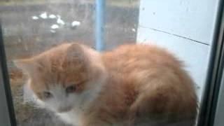 Наглый кот хочет домой