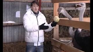 2011.11.12 Страусиная ферма