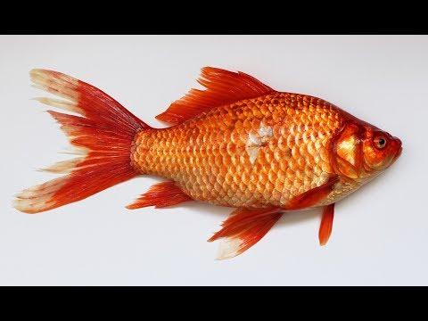 सपने में मछली देखना । Sapne Me Machali Dekhana . Fish Dream Meanning