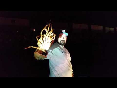 Monster Lobster In the net. Southern California Fishing