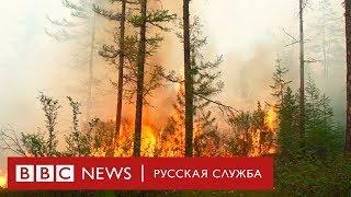 Миллионы гектаров леса в огне