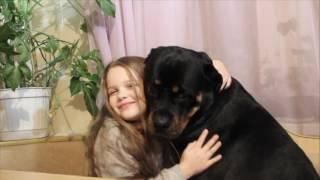 Ротвейлер страшная собака 2