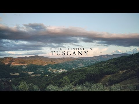 Truffle Hunting in Tuscany • Travel Vlog