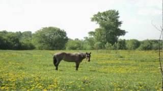 Staraya LadogaСтарая Ладога(Видео с велопохода по правому-левому берегу реки Волхов., 2010-06-04T16:51:46.000Z)
