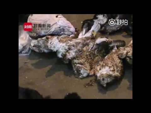 Southwest China's Sichuan announces its largest seizure of rare wild animal trading