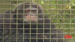 Michael Jacksons Monkey:  Bubbles lives retiree life without MJ