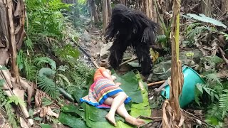 Survival Girl - Monster Like King Kong Meet Girl Looking For Food In The Forest