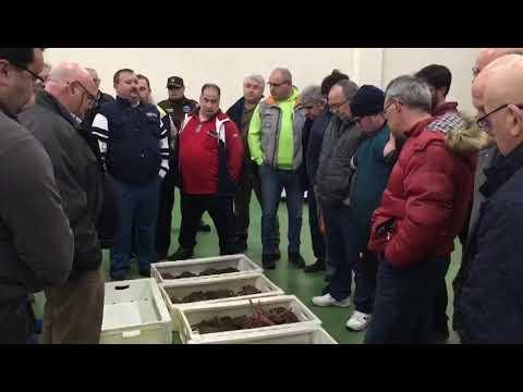 La lonja de Burela acoge la primera subasta de centolla de la temporada