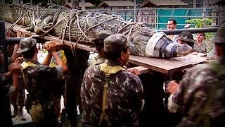 Repeat youtube video Amazonia: The price of life (full documentary)