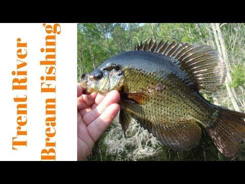 Bream Fishing The Trent River NC