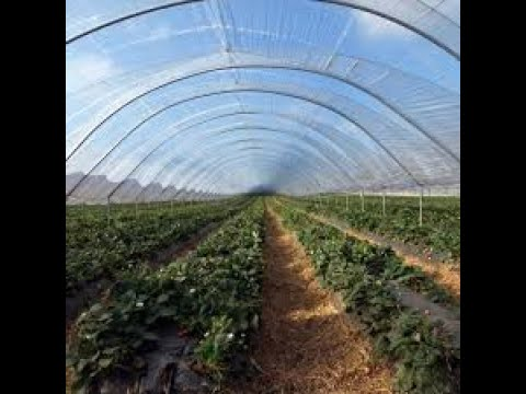 How entrepreneurs are tapping into the greenhouse business