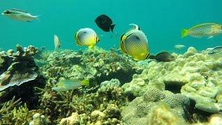 Underwater Pulau Dua Bakongan_02
