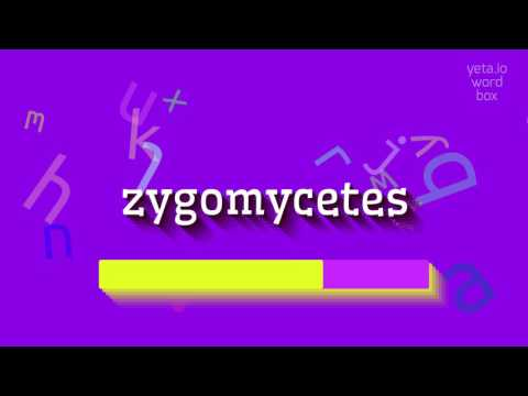 "How to say ""zygomycetes""! (High Quality Voices)"