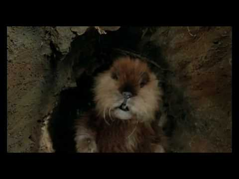 Funny Movie Scene in Caddyshack greasy grimey gopher guts