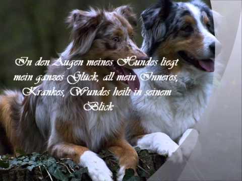 Bon Ein Treuer Freund.wmv